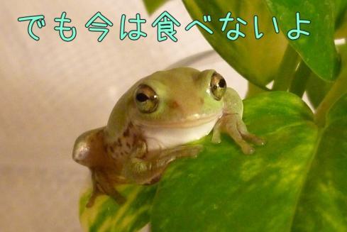 もんちゃん 033-1