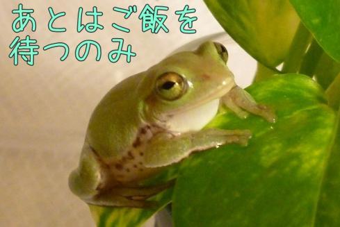 もんちゃん 031