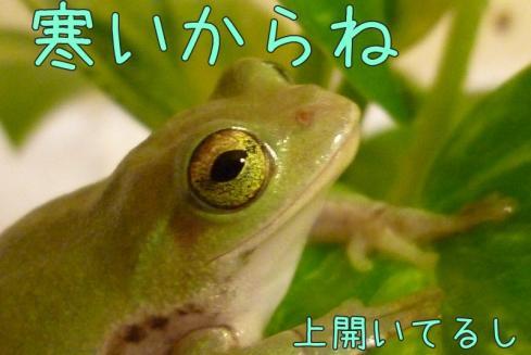 もんちゃん 026