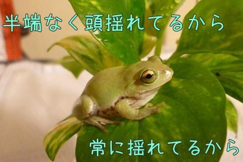 もんちゃん 054