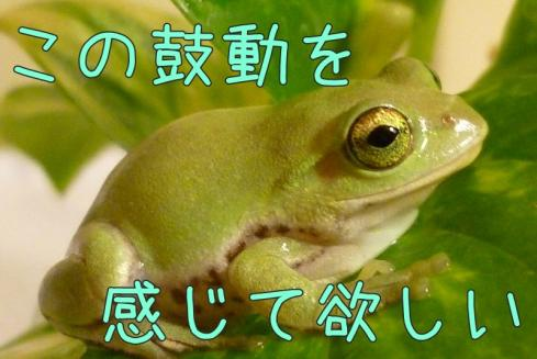 もんちゃん 053