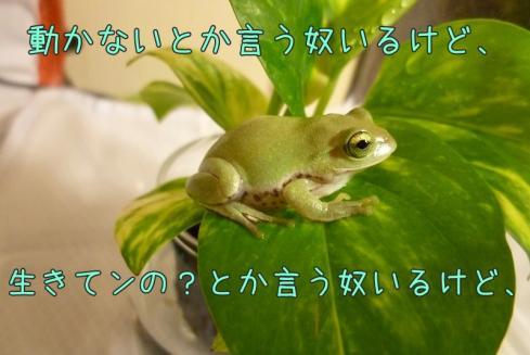 もんちゃん 049