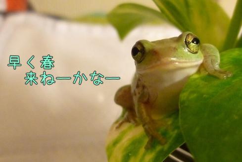 もんちゃん 045