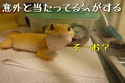 もんちゃん 065