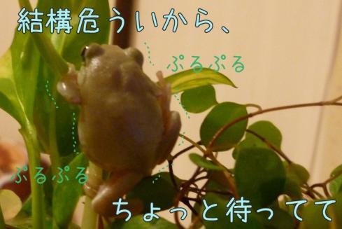 3もんちゃん 015