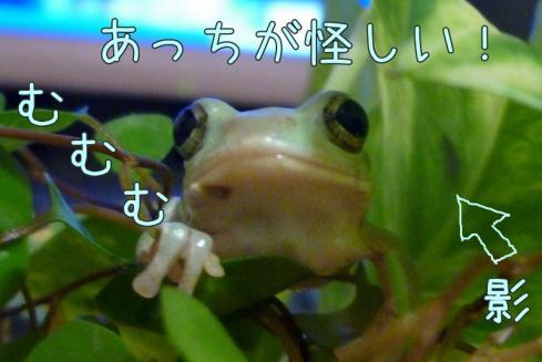 11もんちゃん 041