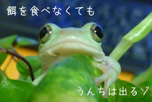 8もんちゃん 038