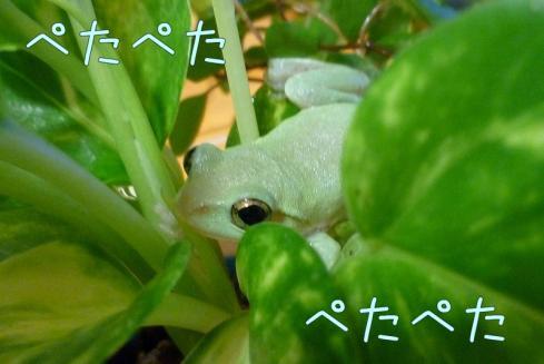 14もんちゃん 059
