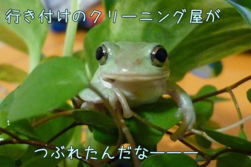 12-1もんちゃん 045