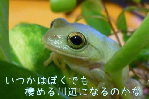 もんちゃん 029