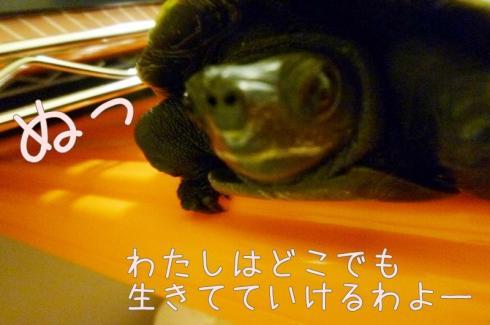 もんちゃん 003
