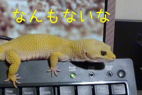 もんちゃん 122