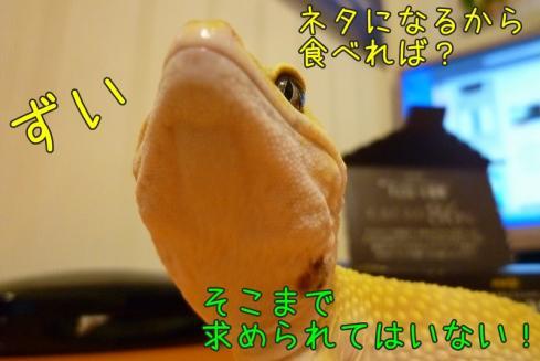 11もんちゃん 066