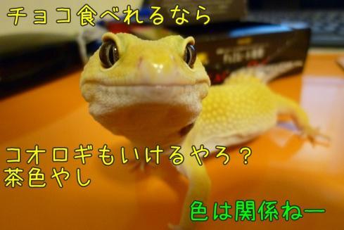 10もんちゃん 10067