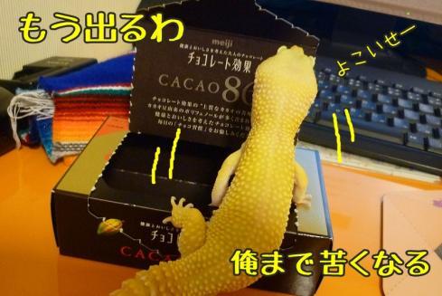 8もんちゃん 057