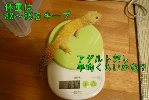 もんちゃん 022