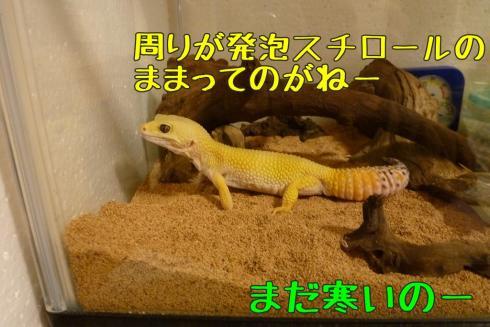 10もんちゃん 010