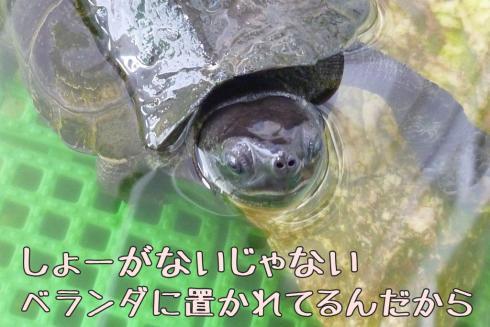もんちゃん 093