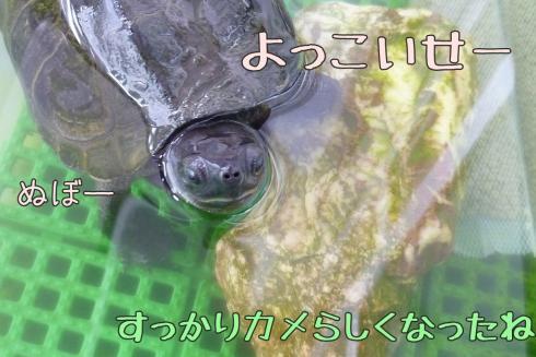 もんちゃん 092