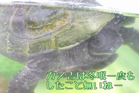 もんちゃん 101