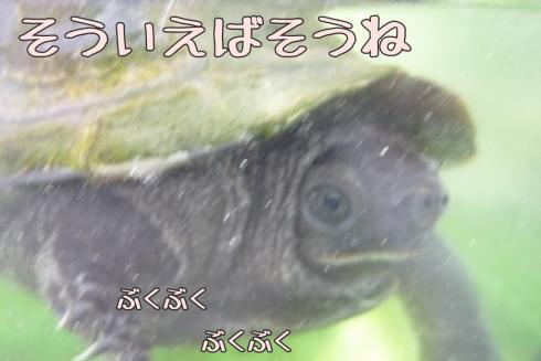 もんちゃん 103