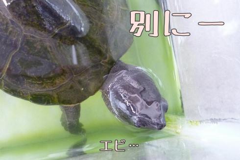 もんちゃん 105