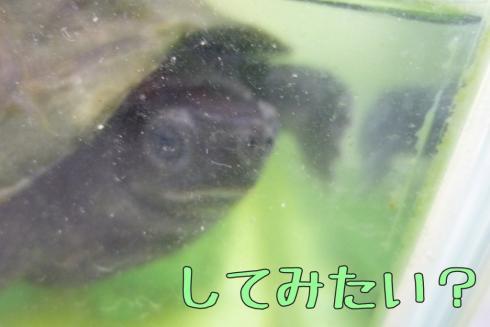 もんちゃん 104