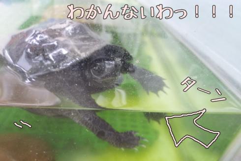 もんちゃん 099-1