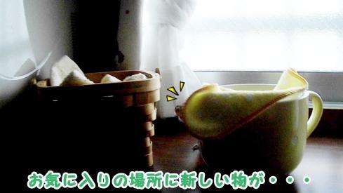 cupsr1