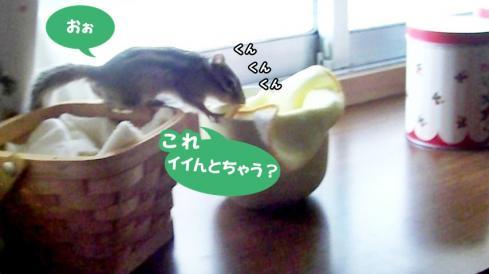 cupsr7
