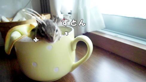 cupsr8