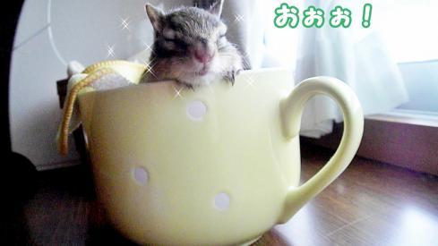cupsr9