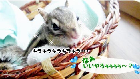 kagosura11