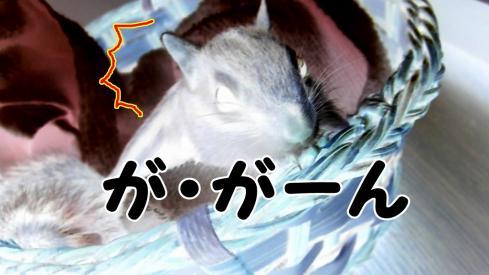 kagosura13