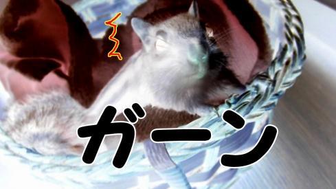 kagosura6