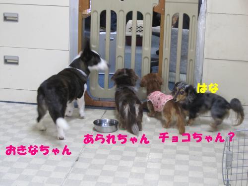 IMG_0932_1_convert_20100209213557.jpg