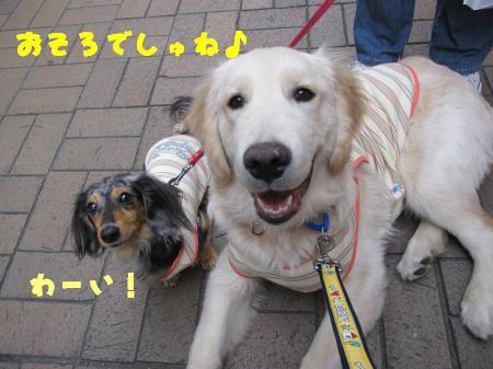 IMG_1123_convert_20100315210744.jpg