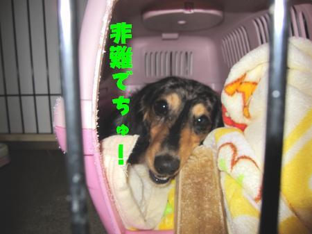 IMG_1395_convert_20100405225624.jpg