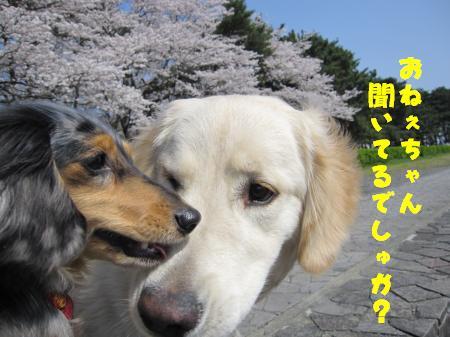 IMG_1457_convert_20100407231302.jpg