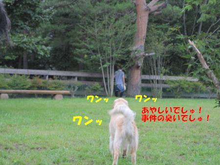 IMG_2842_convert_20100824123625.jpg
