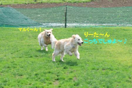 IMG_3203_convert_20100629114215.jpg