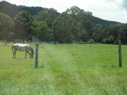 馬が見えてきた