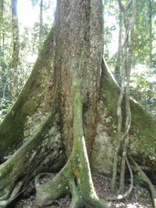 変わった木があります