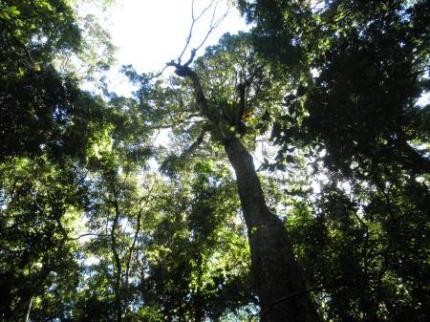 下から見上げた木