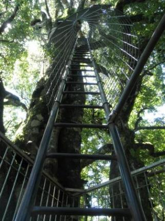 木に登るはしご