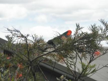インコのような鳥