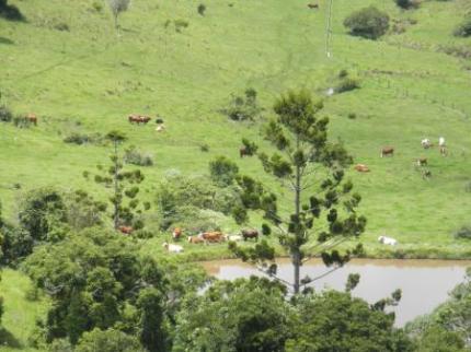 牛や馬がいます