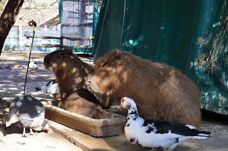 Zoo Lujan (5)