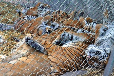 Zoo Lujan (3)