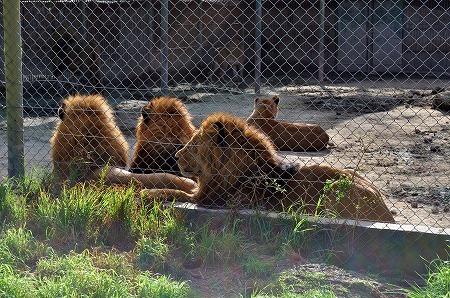 Zoo Lujan (8)